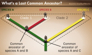 last-common-ancestor-1